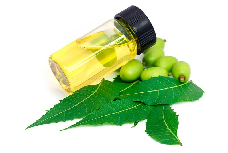 Neem leaves with essential oil
