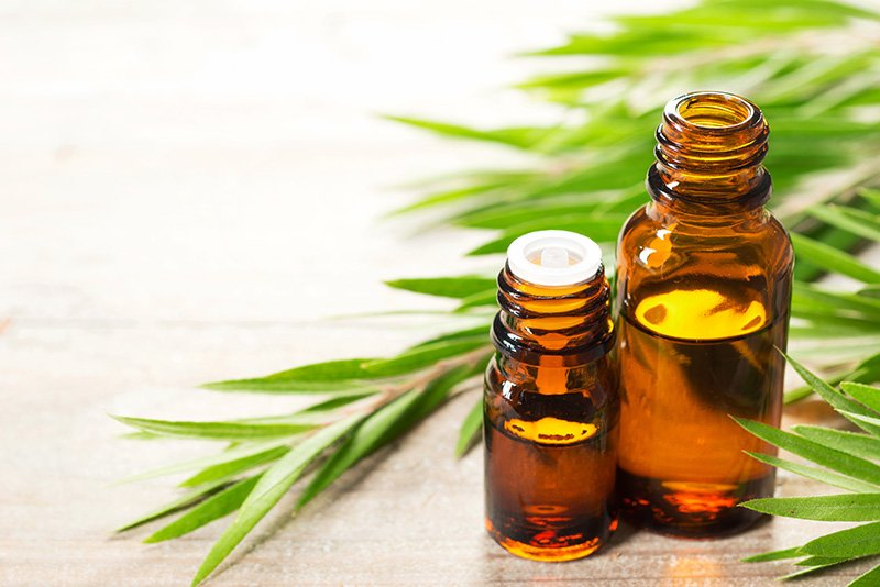 Tea tree leaves and essential oil