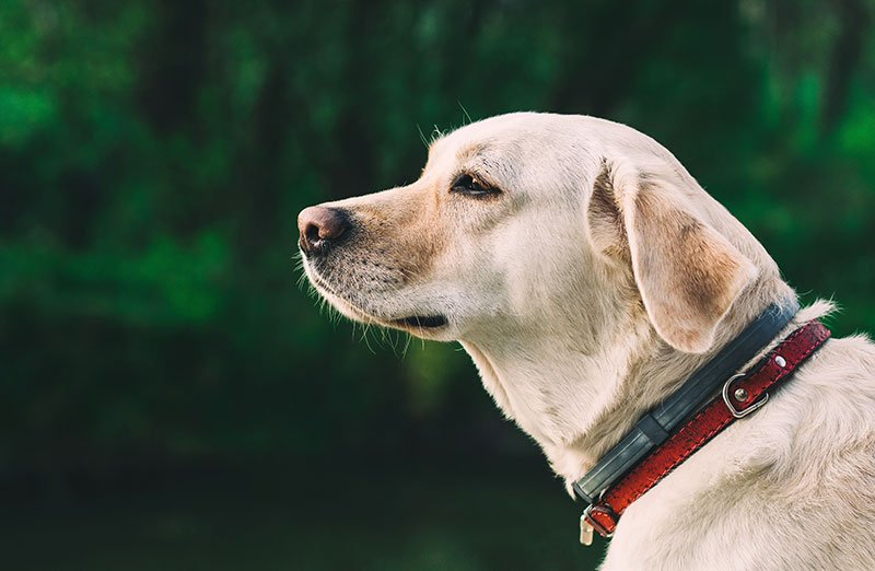 Flea Collars for Dogs and Cats That Effectively Repel Pests