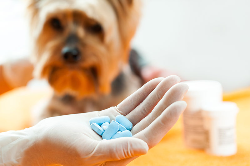 Flea Pills and Oral Flea Control for Dogs and Cats
