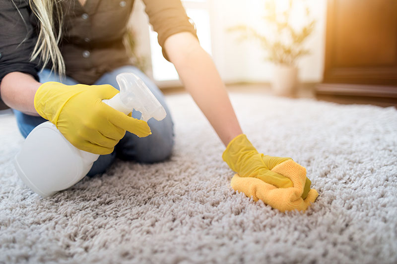 Flea Spray for Homes on Carpets and Clothing