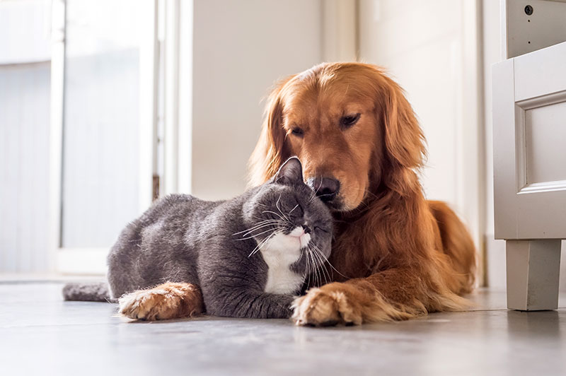 Flea prevention for adult dogs and cats