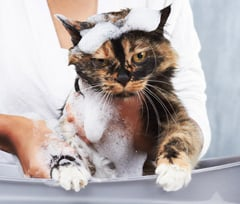 Flea Prevention – Keep Fleas Away from Your Pets