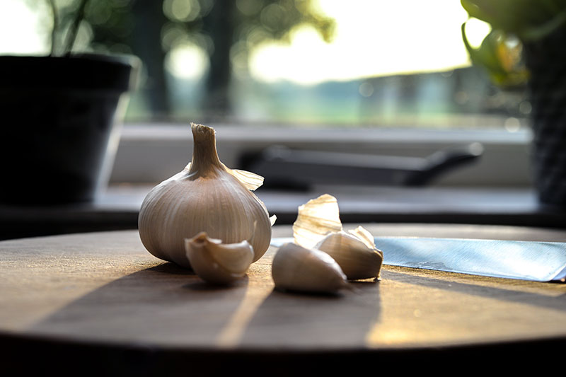 Get rid of fleas naturally using garlic
