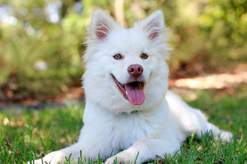Happy dog without fleas