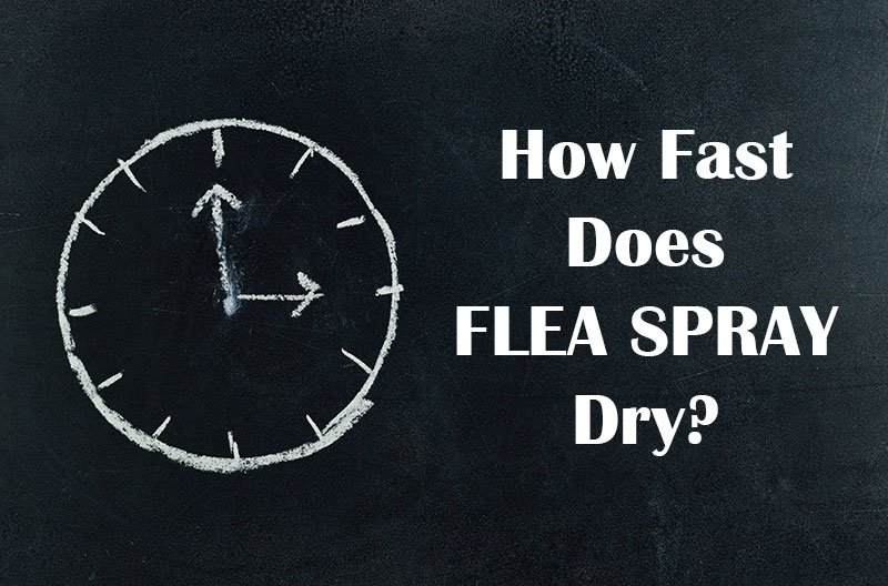 How long does it take for flea spray to dry?