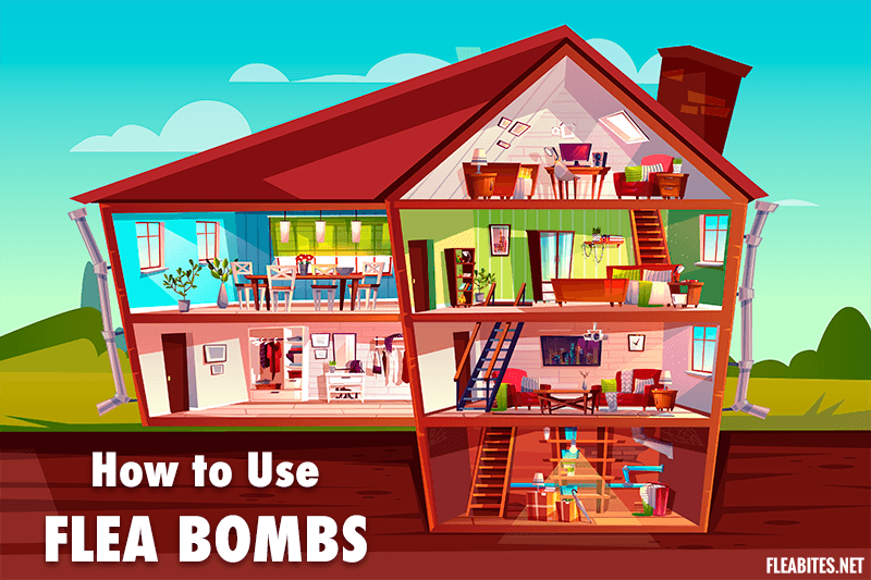 How to Use Flea Bombs