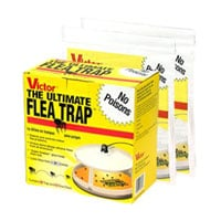 Popular flea traps and foggers