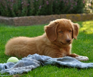 How to Get Rid of Fleas in the Yard - 5 Effective Ways