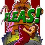 How to Prevent Flea Bites