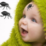 Flea Bites on Babies – Are Fleas Biting Your Baby?