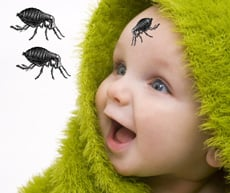 Flea Bites on Babies - Are Fleas Biting Your Baby?