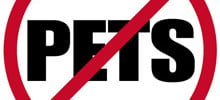 Fleas Without Pets – Why Do I Have Fleas When I Have No Pets?