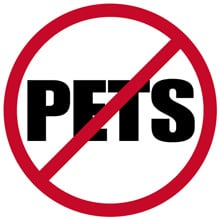 Fleas Without Pets - Why Do I Have Fleas When I Have No Pets?