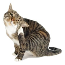 Find Flea Products for Cats - Flea Medication Comparison