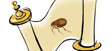 The History of Fleas – Where Do Fleas Come From?
