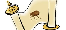 The History of Fleas