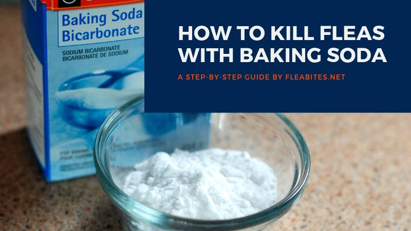 How to Kill Fleas with Baking Soda