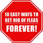 Getting Rid of Fleas – 10 Easy Ways to Get Rid of Fleas for Good