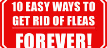 Getting Rid of Fleas – 10 Easy Ways to Get Rid of Fleas for Good