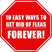Getting Rid of Fleas - 10 Easy Ways to Get Rid of Fleas Forever