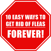 Getting rid of fleas 10 easy ways to get rid of fleas for good getting rid of fleas 10 easy ways to get rid of fleas forever ccuart Image collections