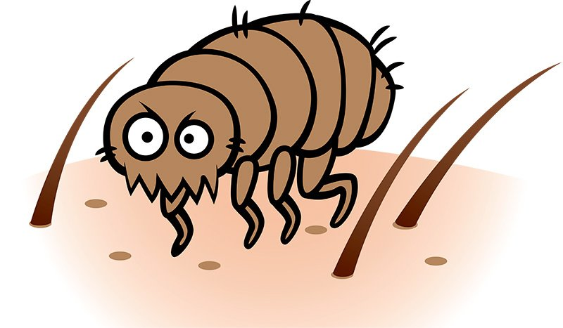 How to Treat Fleas in Human Hair