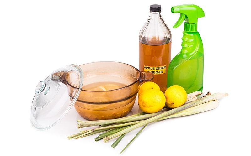 Homemade flea spray recipes