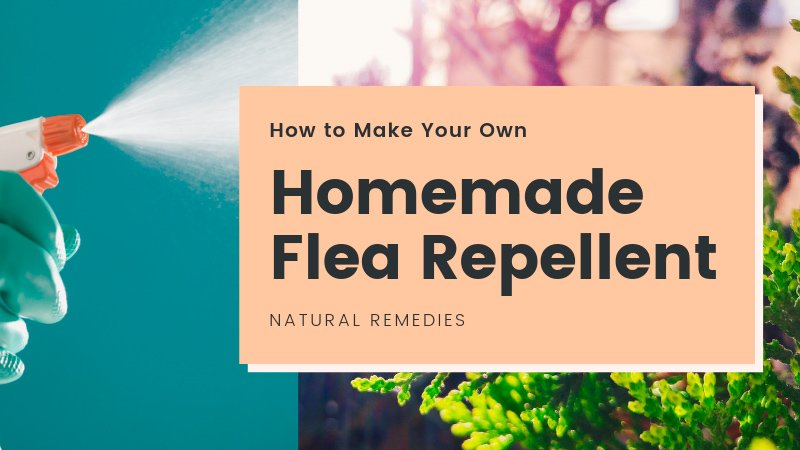 Homemade flea repellent guide