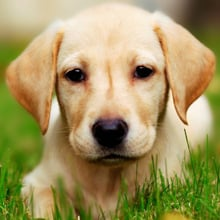 Ways to Naturally Get Rid of Fleas on Dogs