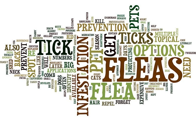 Flea and tick prevention word cloud