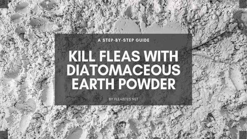Diatomaceous earth flea control guide