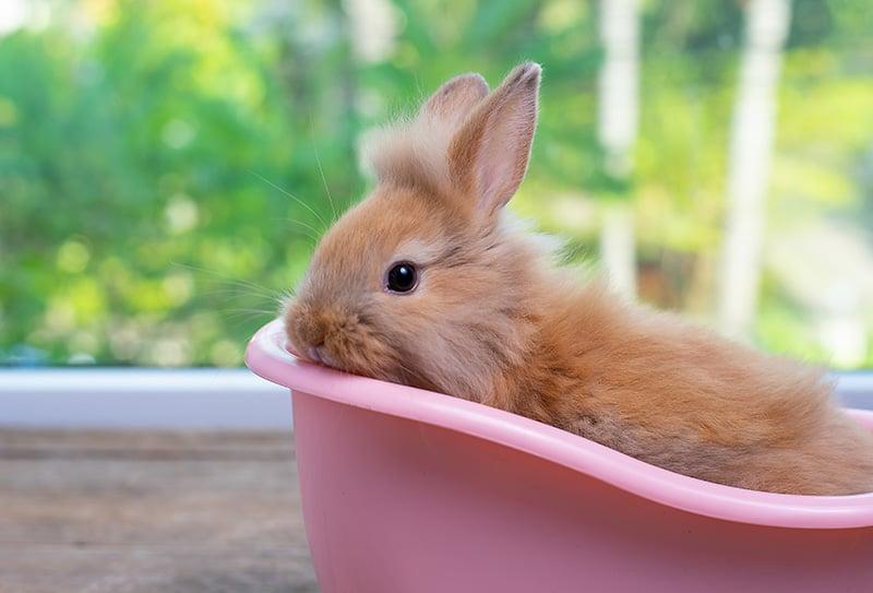 Pet rabbit taking a bath in dishwashing soap