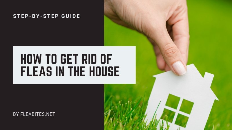 Get Rid of Fleas in the House Guide