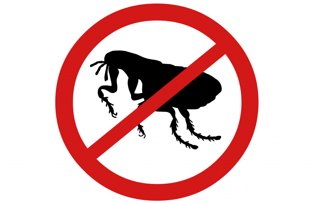 No fleas symbol isolated on white background